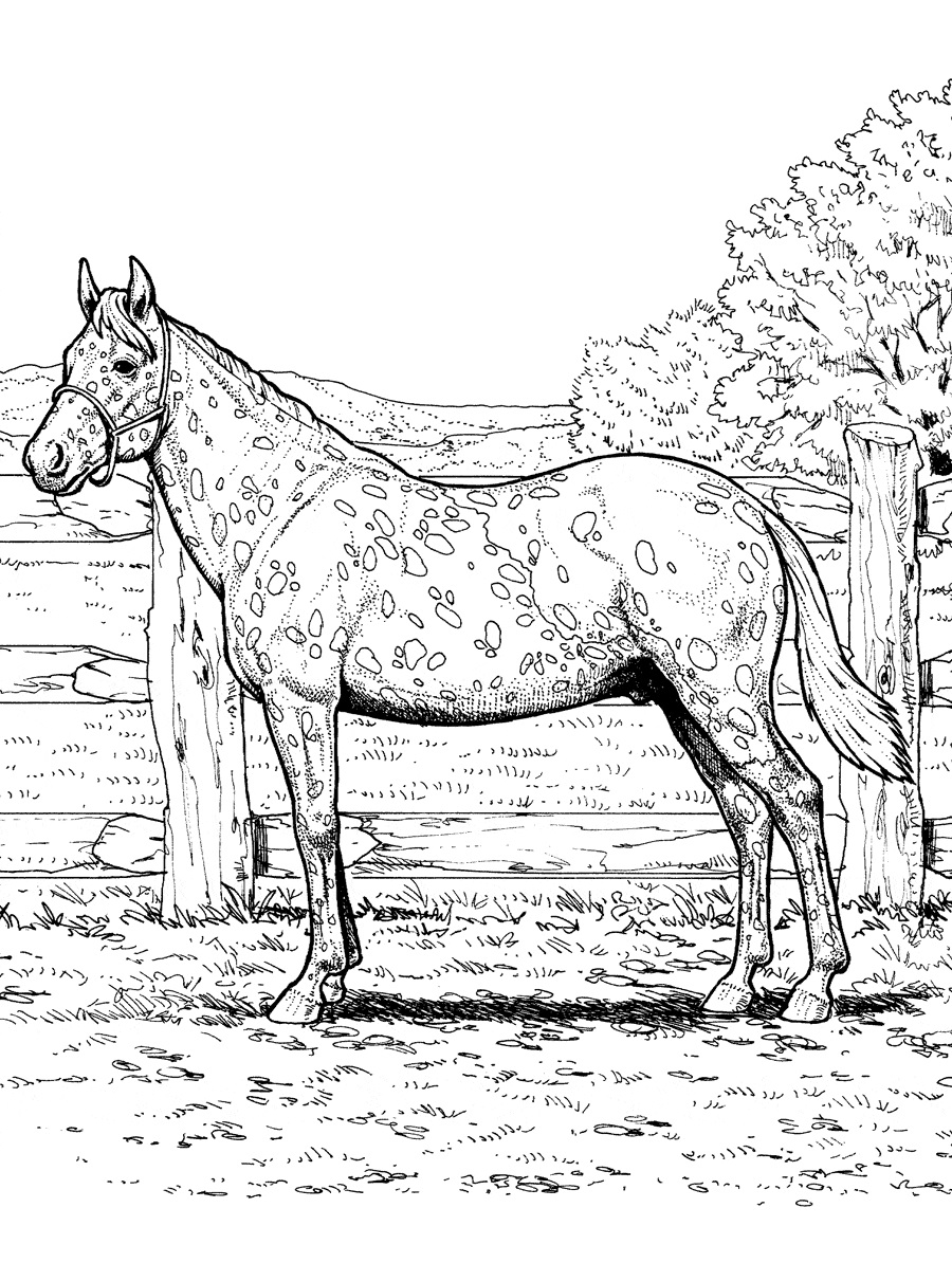 Coloriage Cheval Grande Collection 100 Pieces Imprimer En Ligne