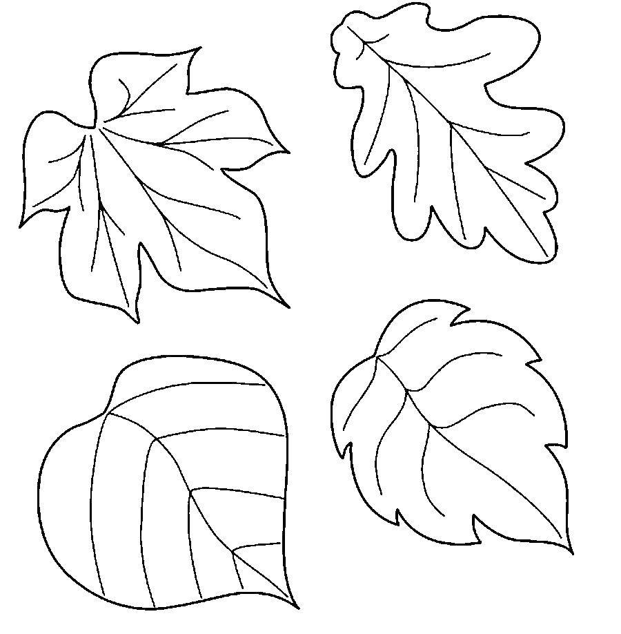 Раскраски листьев для детей. Распечатайте онлайн или скачайте!