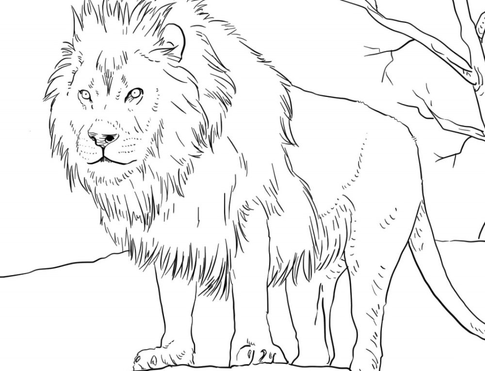 Coloring Pages Animals. Download or Print for Children, 100 images