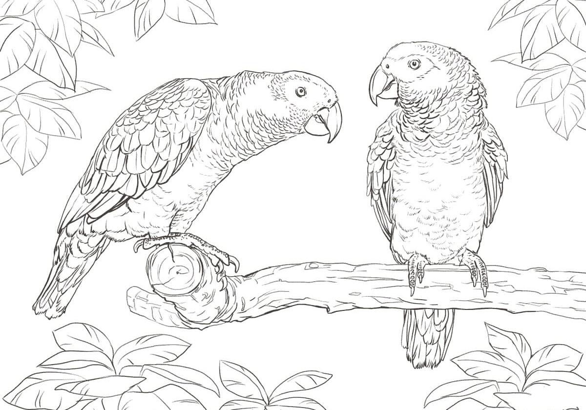 Раскраски Попугай. Распечатать можно бесплатно, 100 картинок