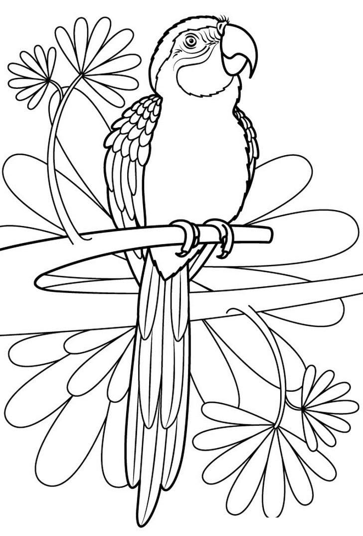 Parrot Coloring Pages. Print for free for children, 100 images