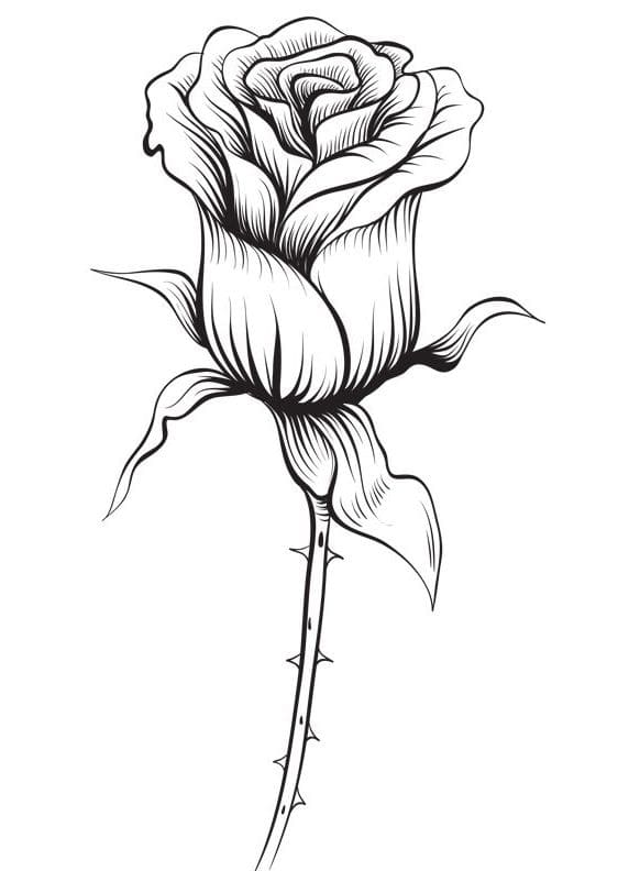 Coloring pages: Coloring pages: Rose, printable for kids & adults ... | 792x582