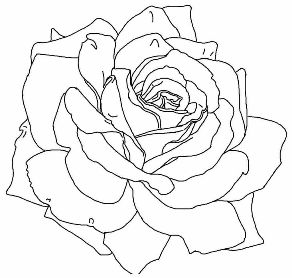 Dibujos para colorear Rose. Imprime la reina de las flores en línea