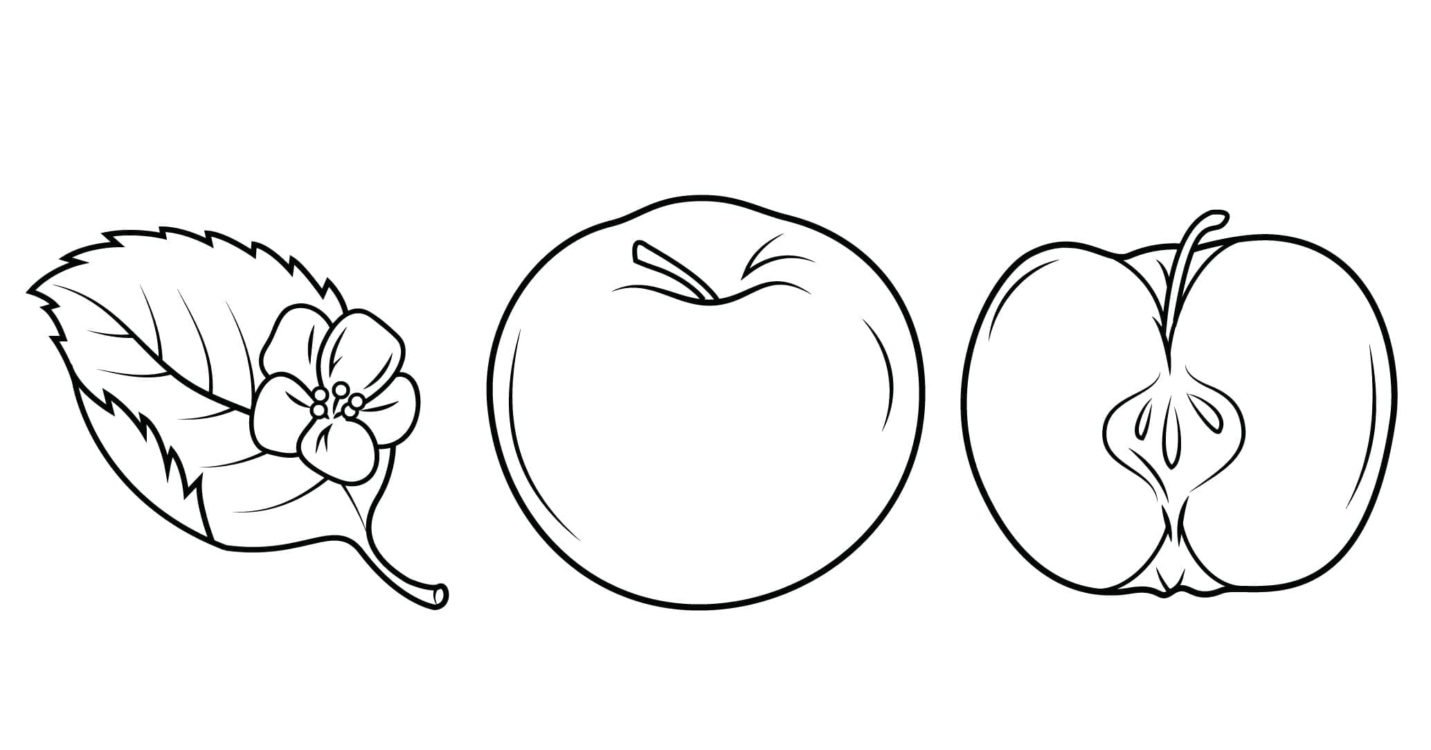 Раскраска фрукты. Скачайте или распечатайте онлайн
