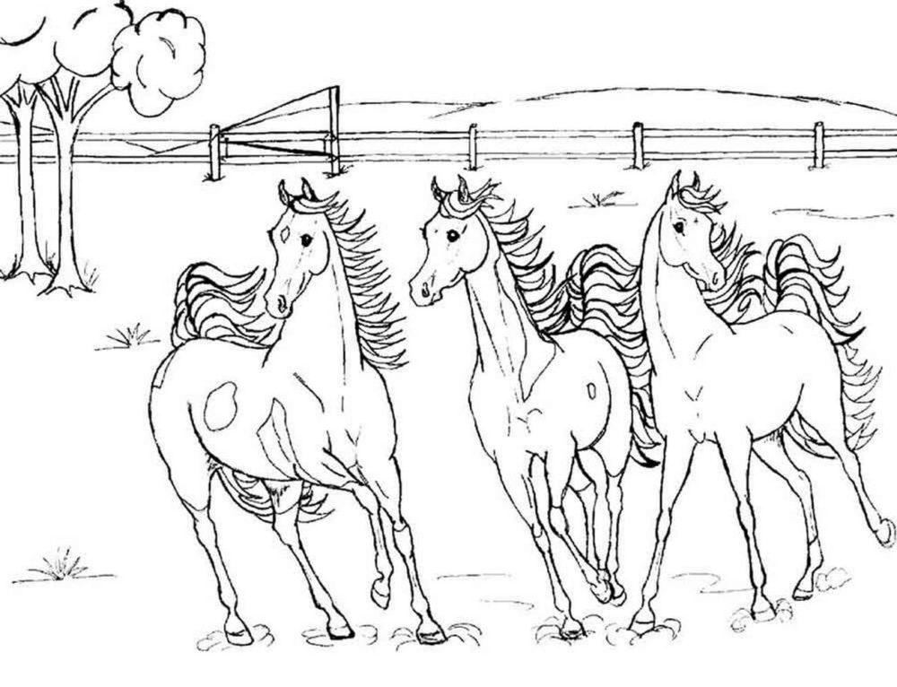 Раскраски Лошади. Большая коллекция, 100 штук. Распечатать онлайн