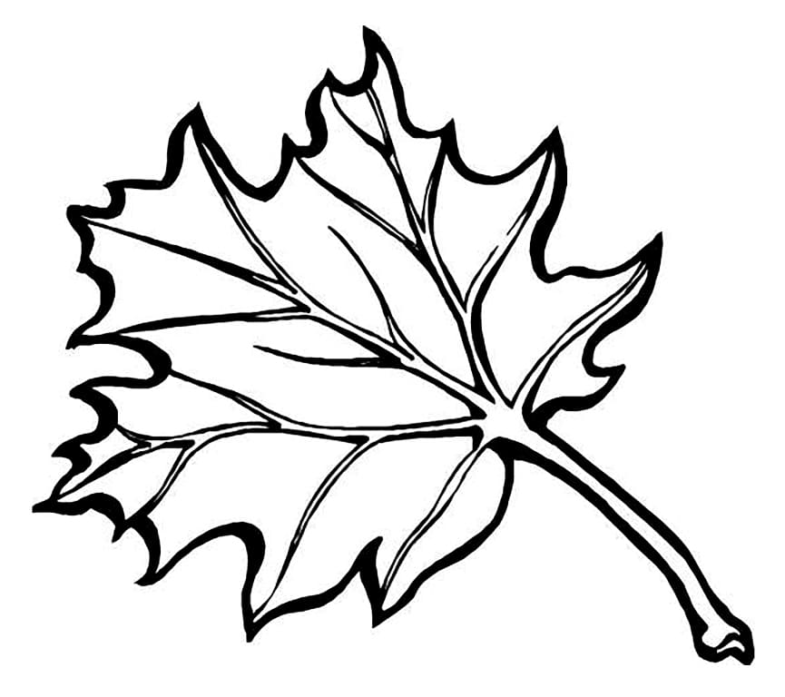 Раскраски Осень. Скачать или распечатать бесплатно