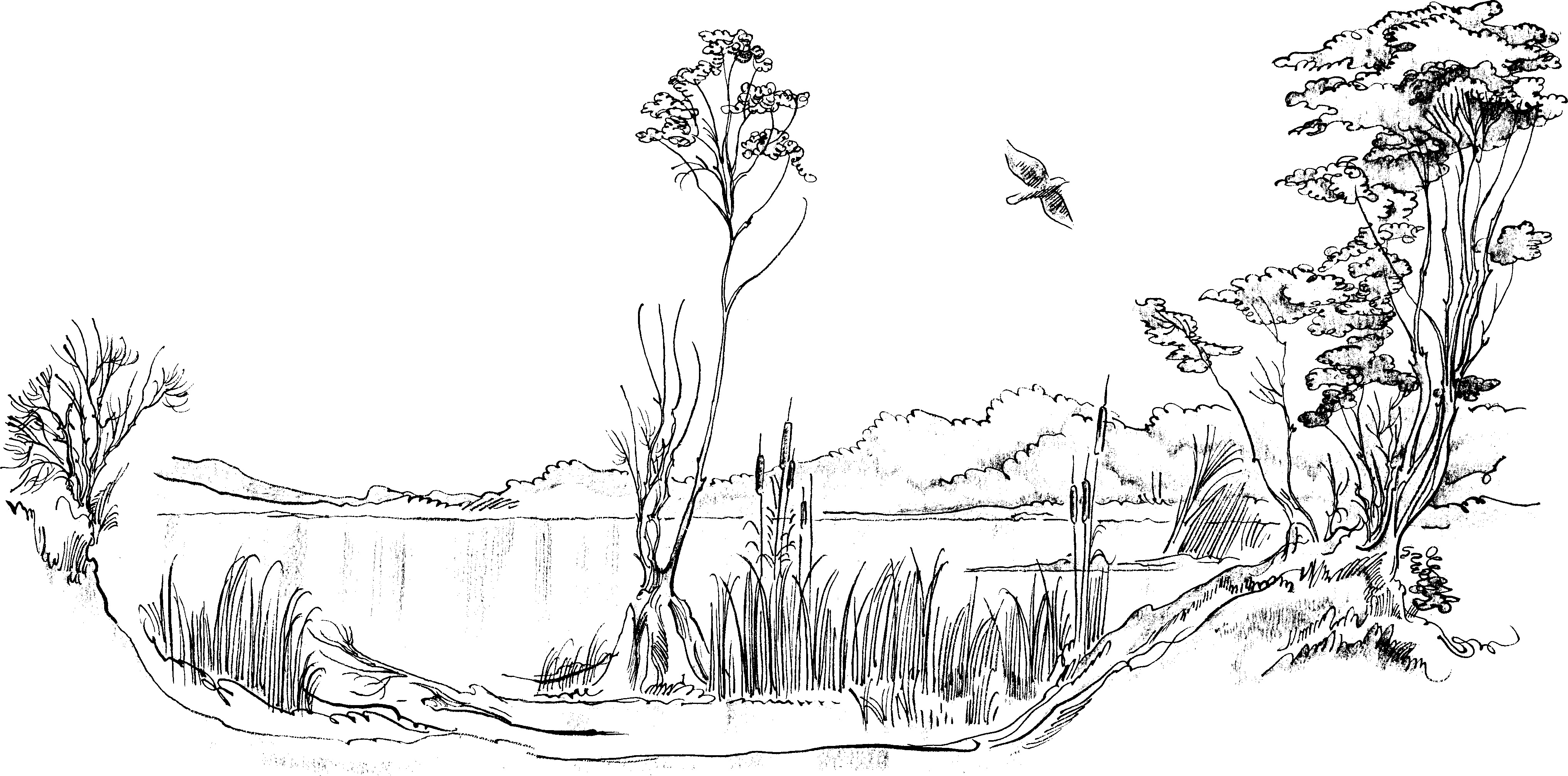 Coloring Pages Nature. Landscape, forest, mountains, sea, island | 2013x4065