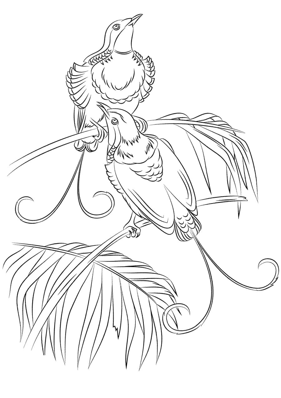 Bird Coloring Pages 75 Best Images Free Printable