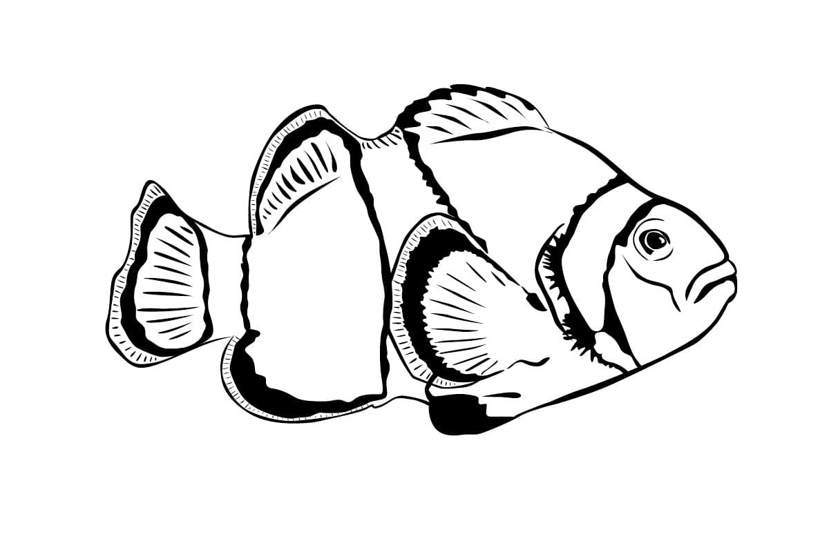 Рыбы картинки раскраски, вторником картинки блестящие