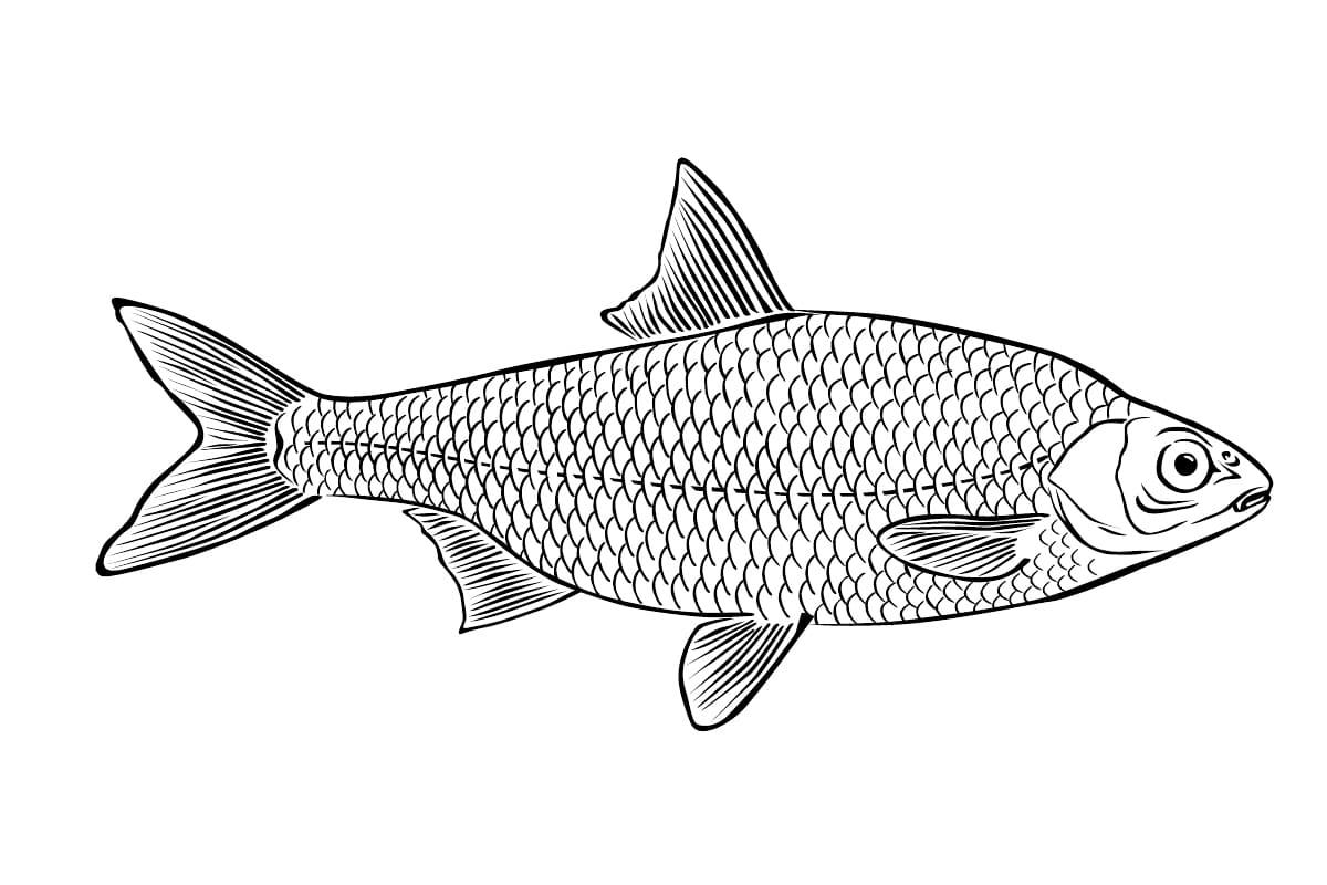 Рыбы картинки раскраски, маму сыном картинки