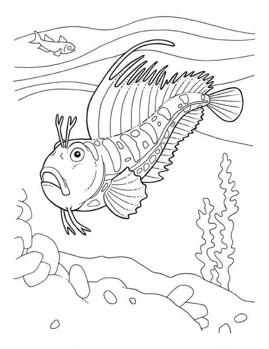 Раскраски Рыбы. Скачать и распечатать можно бесплатно