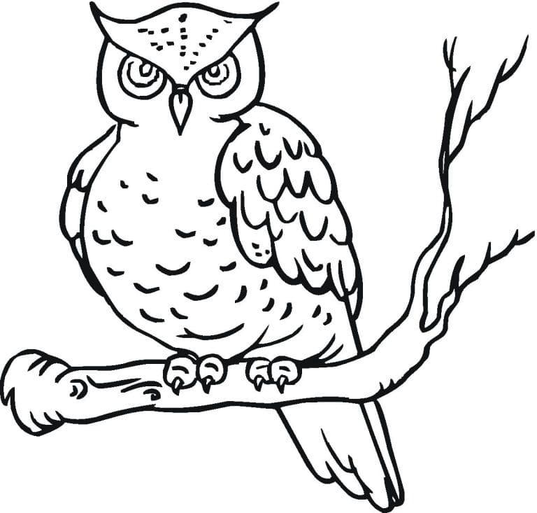 картинка сова раскраска будет