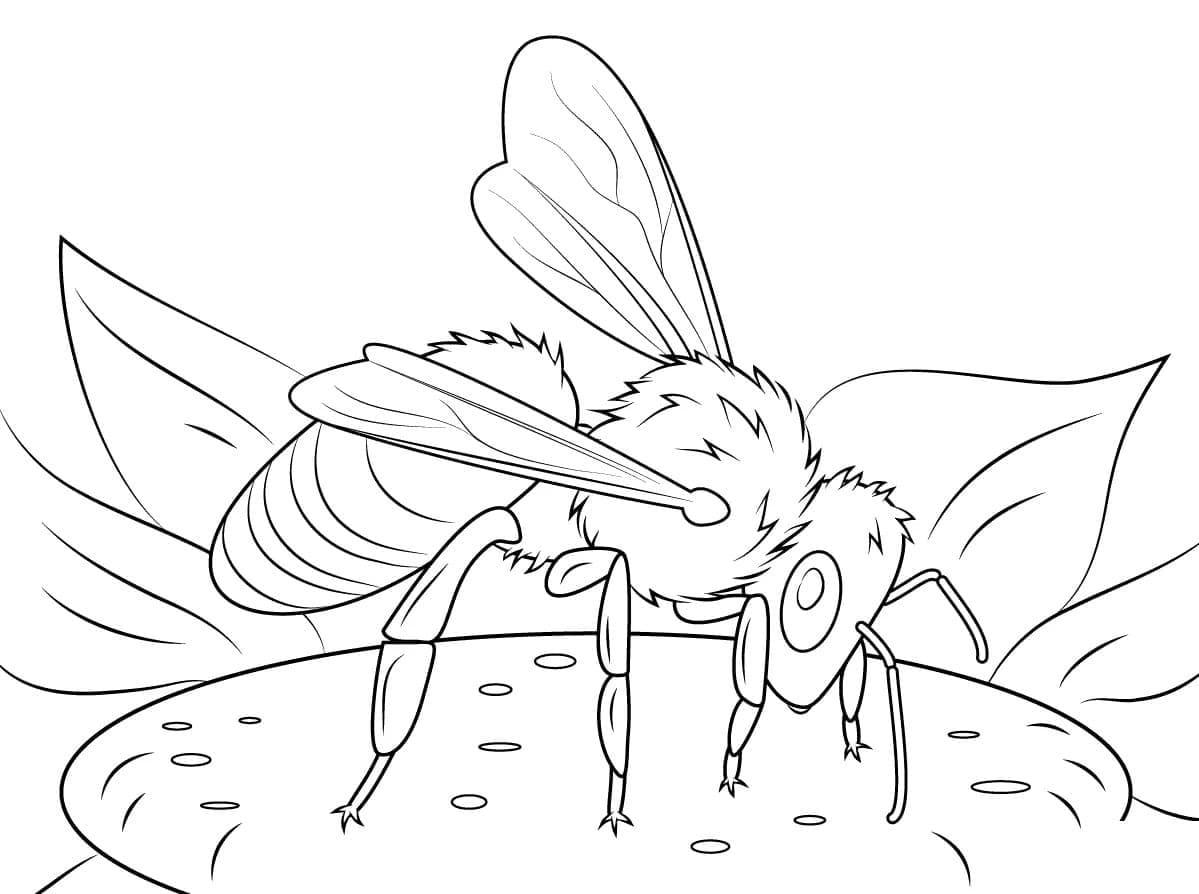 Ausmalbilder Bienen  28 Malvorlagen Kostenlos zum Ausdrucken
