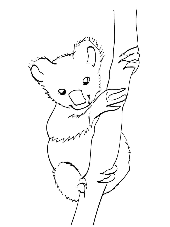 Ausmalbilder Koala  16 Malvorlagen Kostenlos zum Ausdrucken