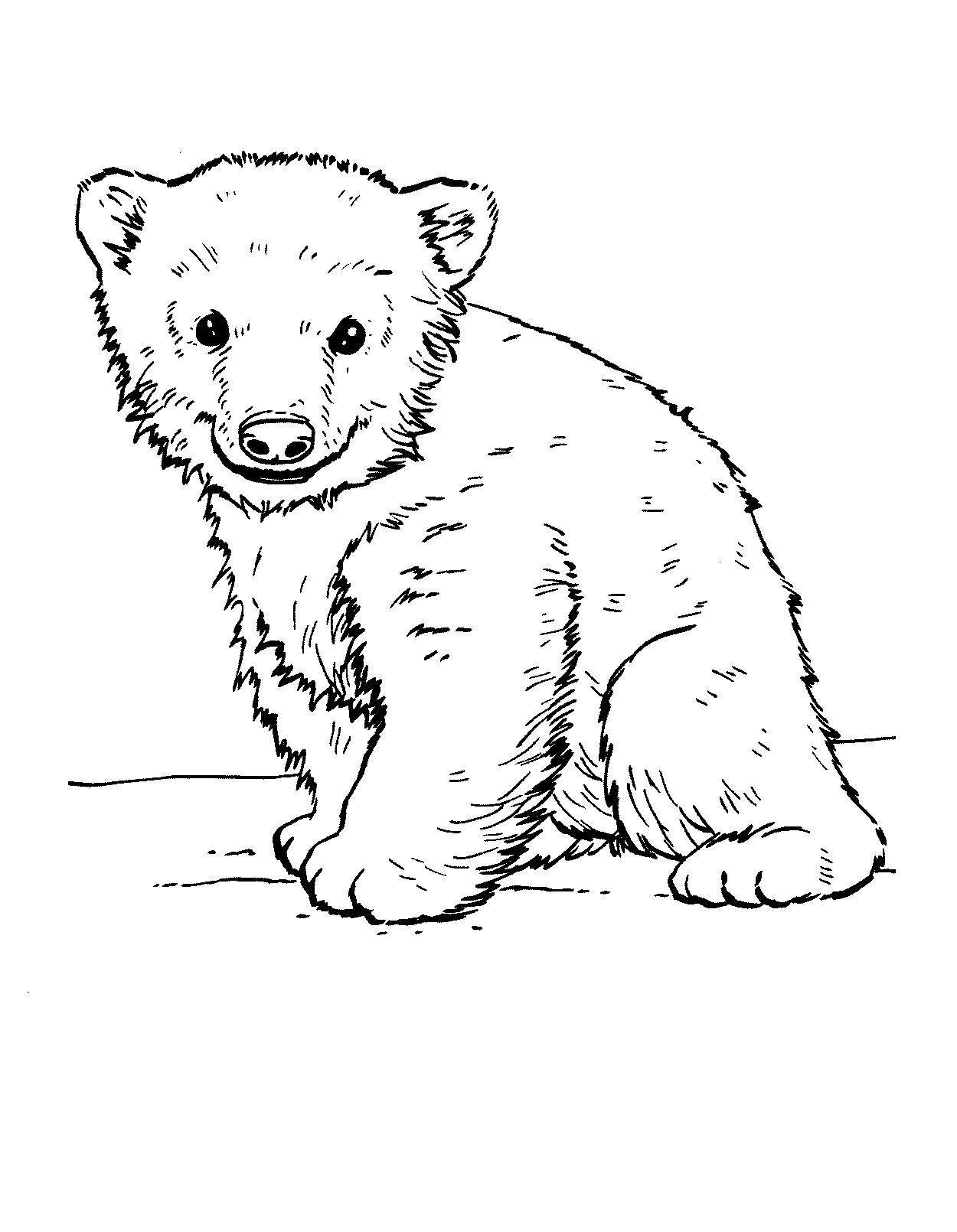 Ausmalbilder Eisbär  24 Malvorlagen zum kostenlosen Drucken