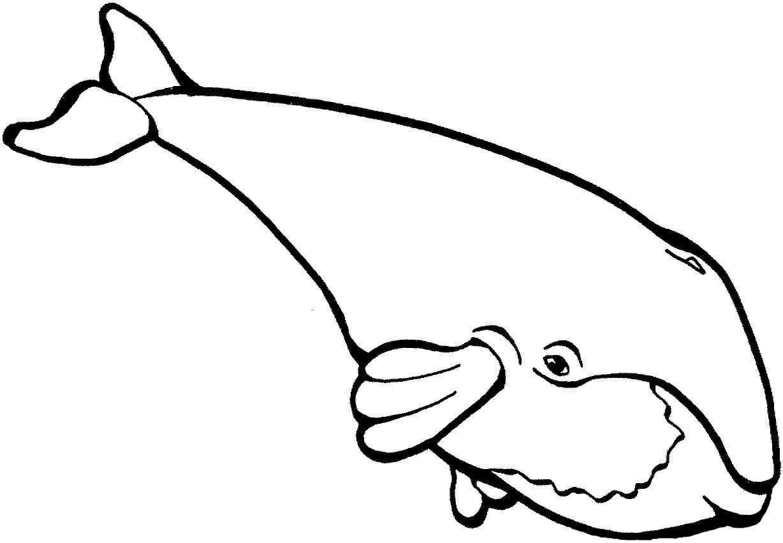 Ausmalbilder Wale  24 Malvorlagen Kostenlos zum Ausdrucken