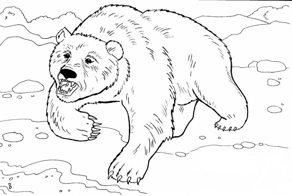 Disegni Di Animali Selvatici Da Colorare 70 Immagini Da Stampare