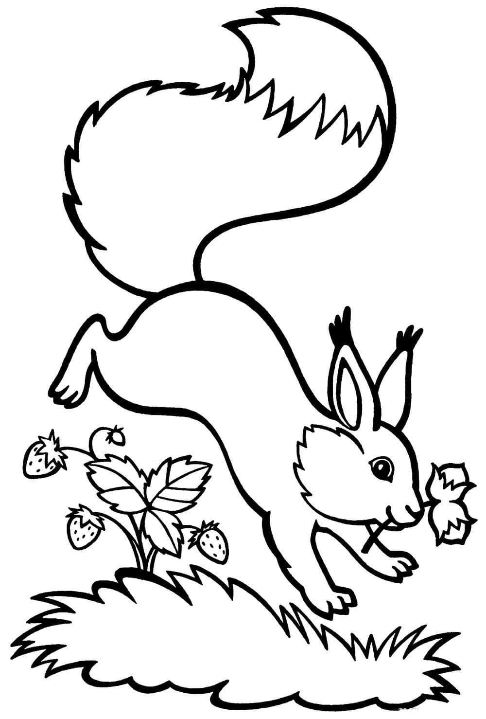 Ausmalbilder Eichhörnchen. 8 Bilder zum kostenlosen Drucken