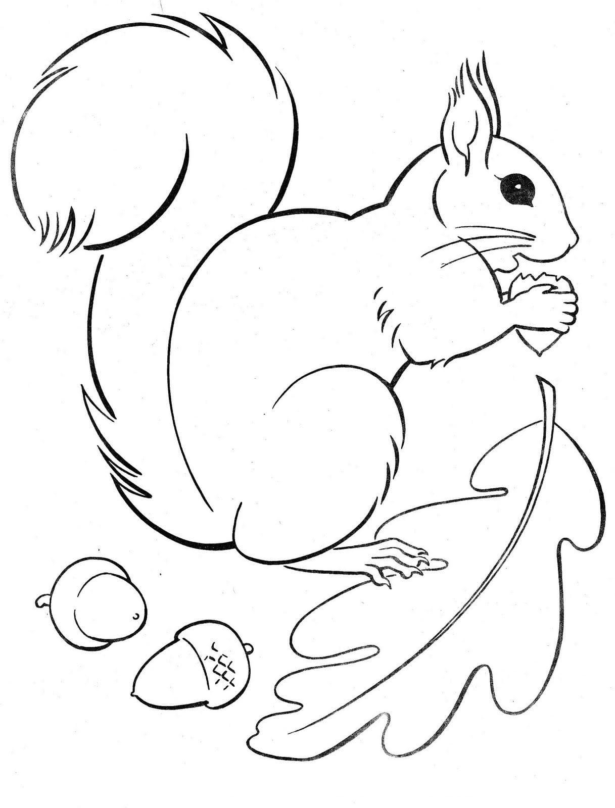 Ausmalbilder Eichhörnchen. 5 Bilder zum kostenlosen Drucken