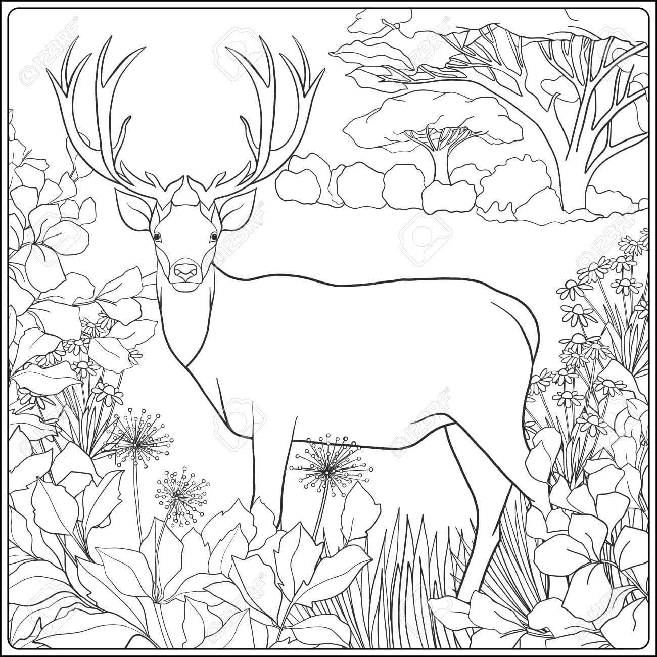 Coloring Pages for Adults. All the Topics! Print for Free