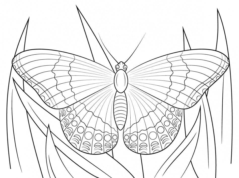 Coloriage de papillons pour enfants, 100 images. Imprimer gratuitement!