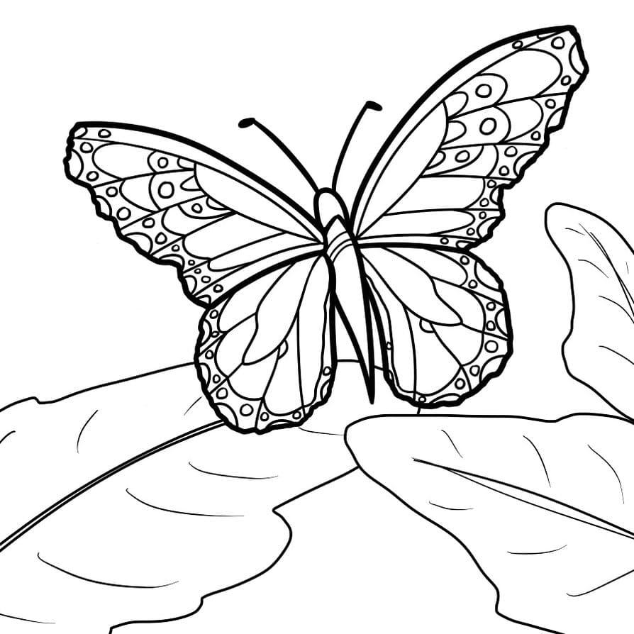 Картинка разукрашка бабочка