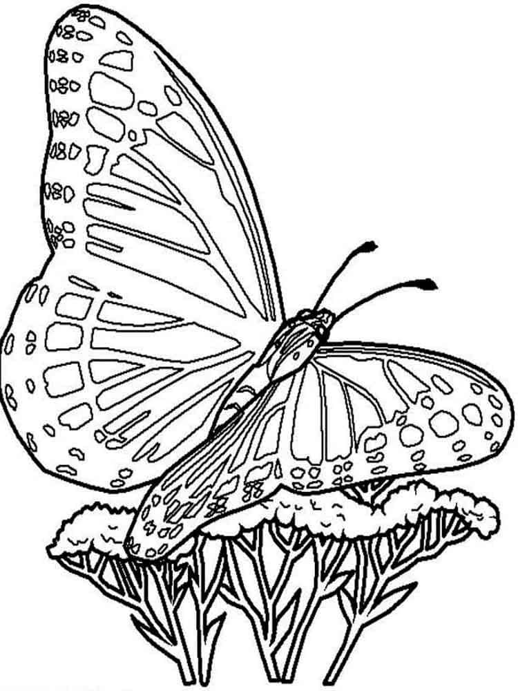 Раскраски бабочек для детей, 100 штук. Распечатайте бесплатно!