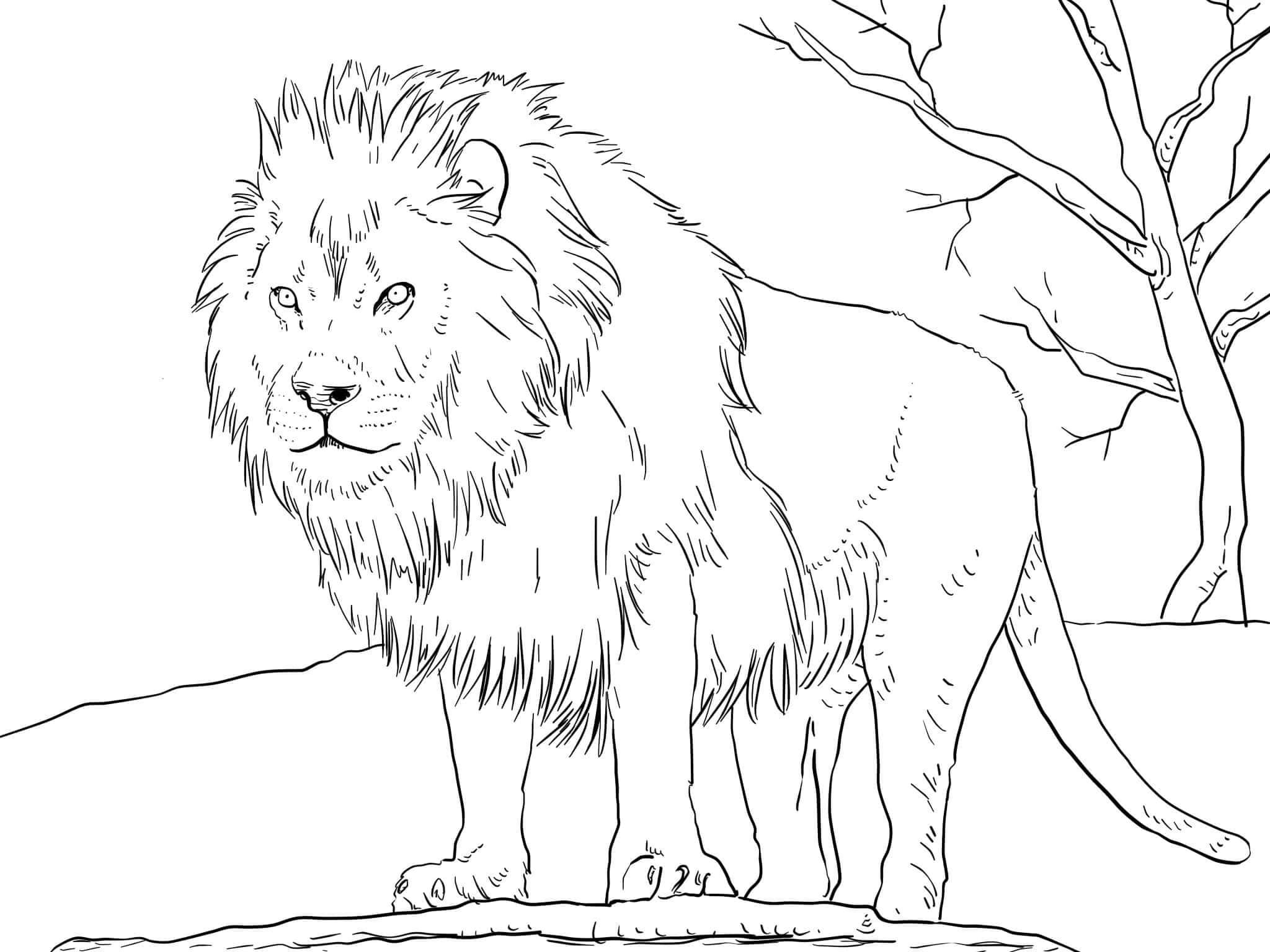 Раскраска про диких животных распечатать