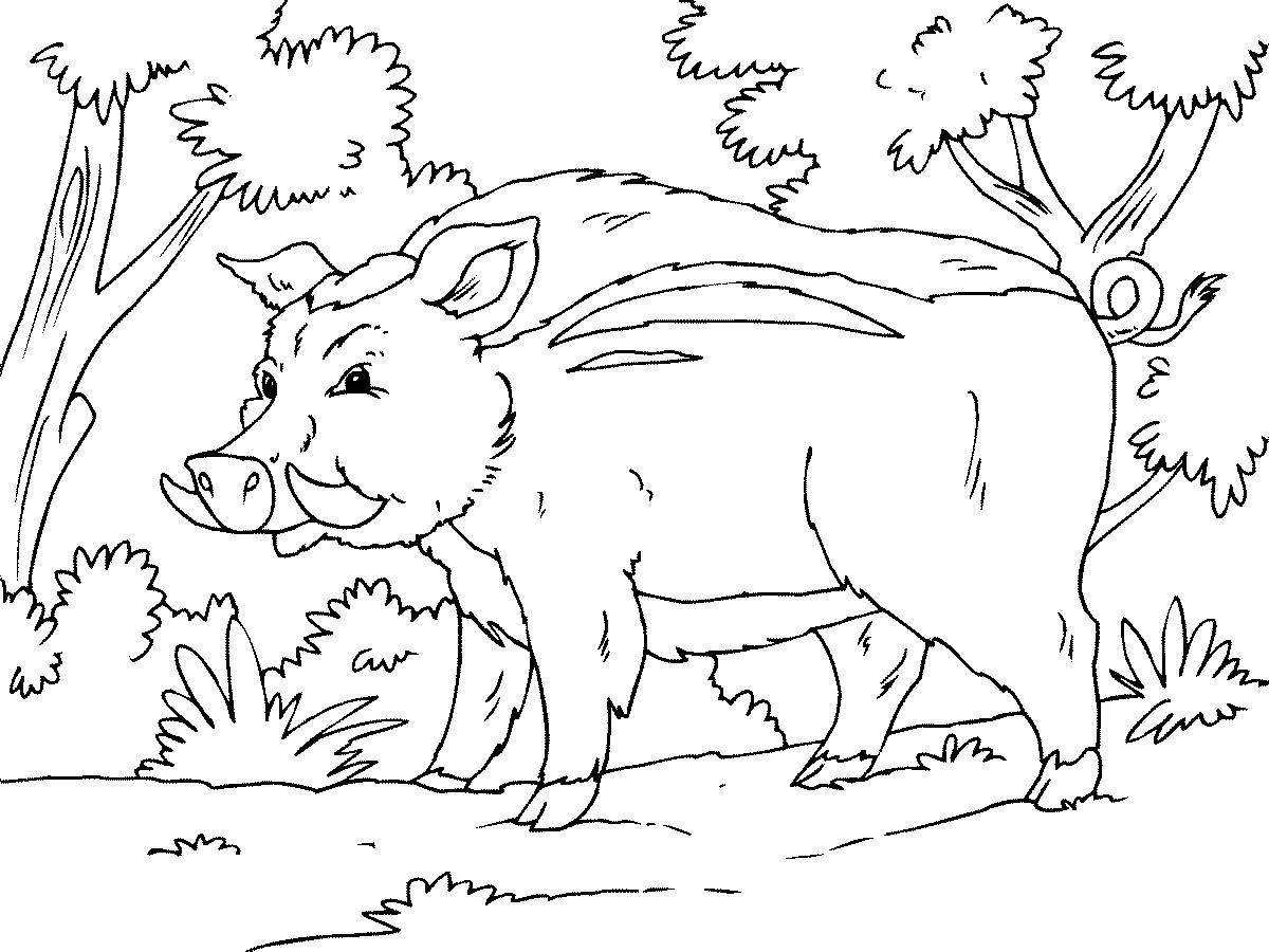 Рисунок кабана карандашом