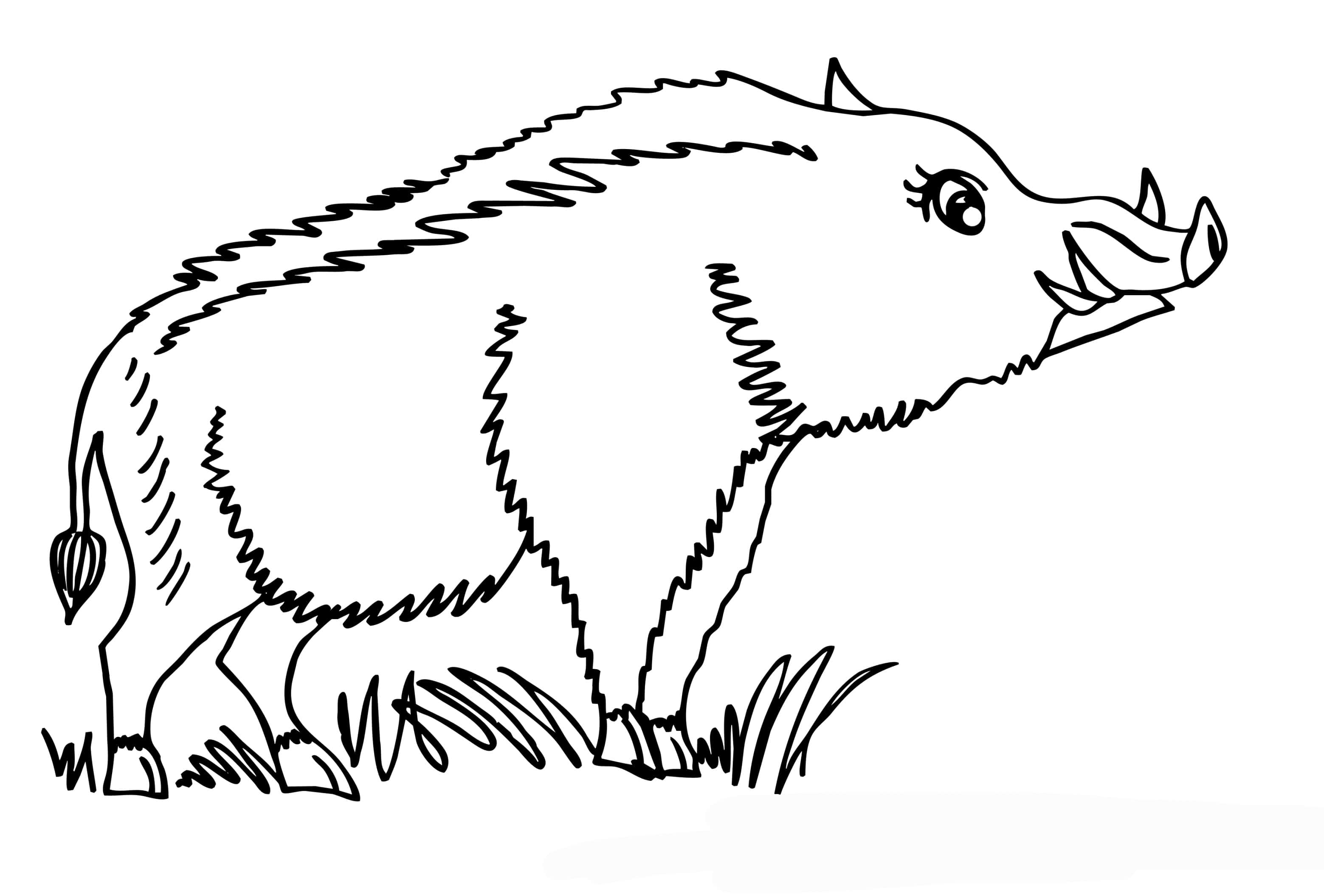 Картинки лесных животных черно белые