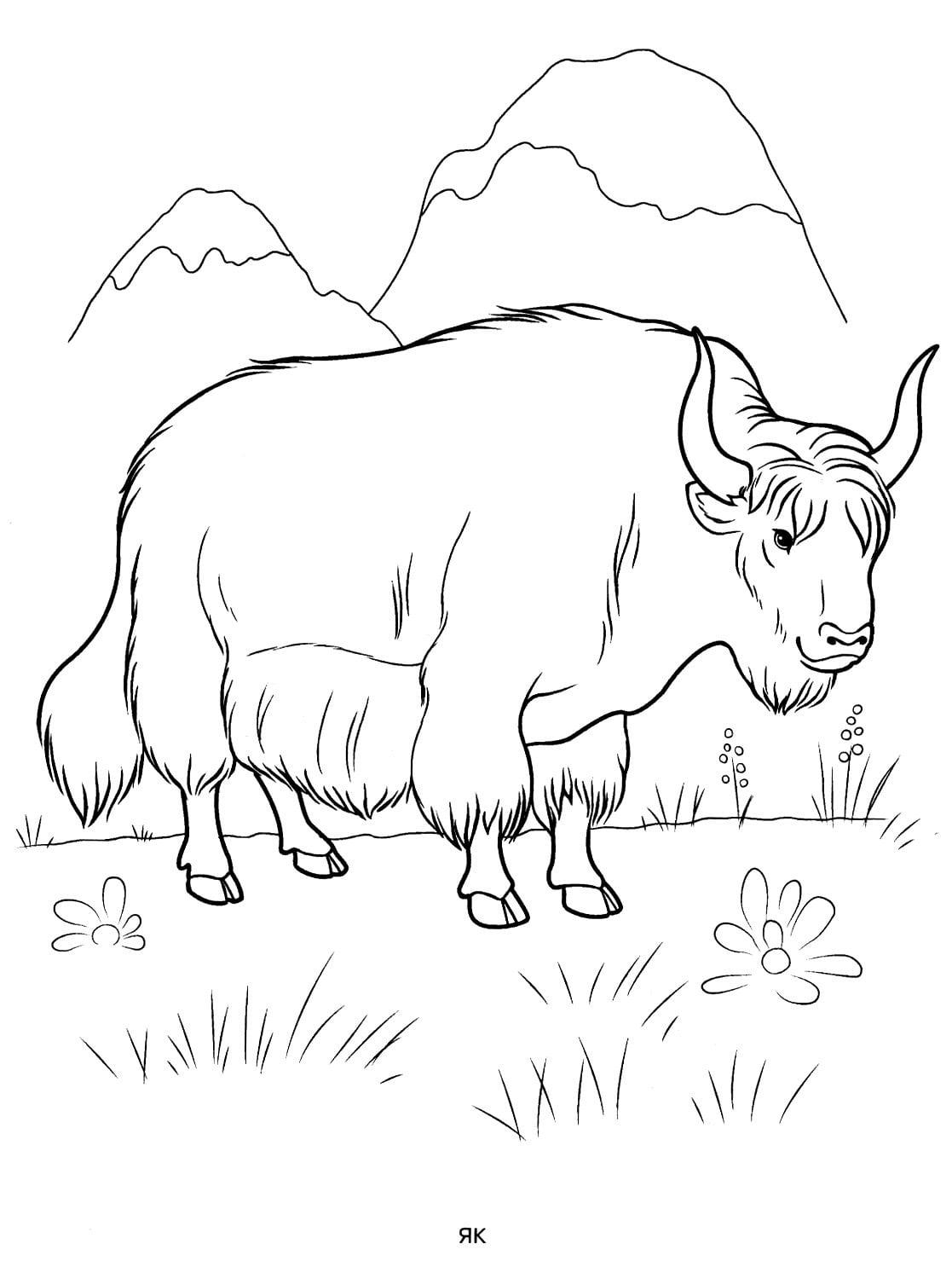 Раскраски диких животных для детей. Распечатайте онлайн!