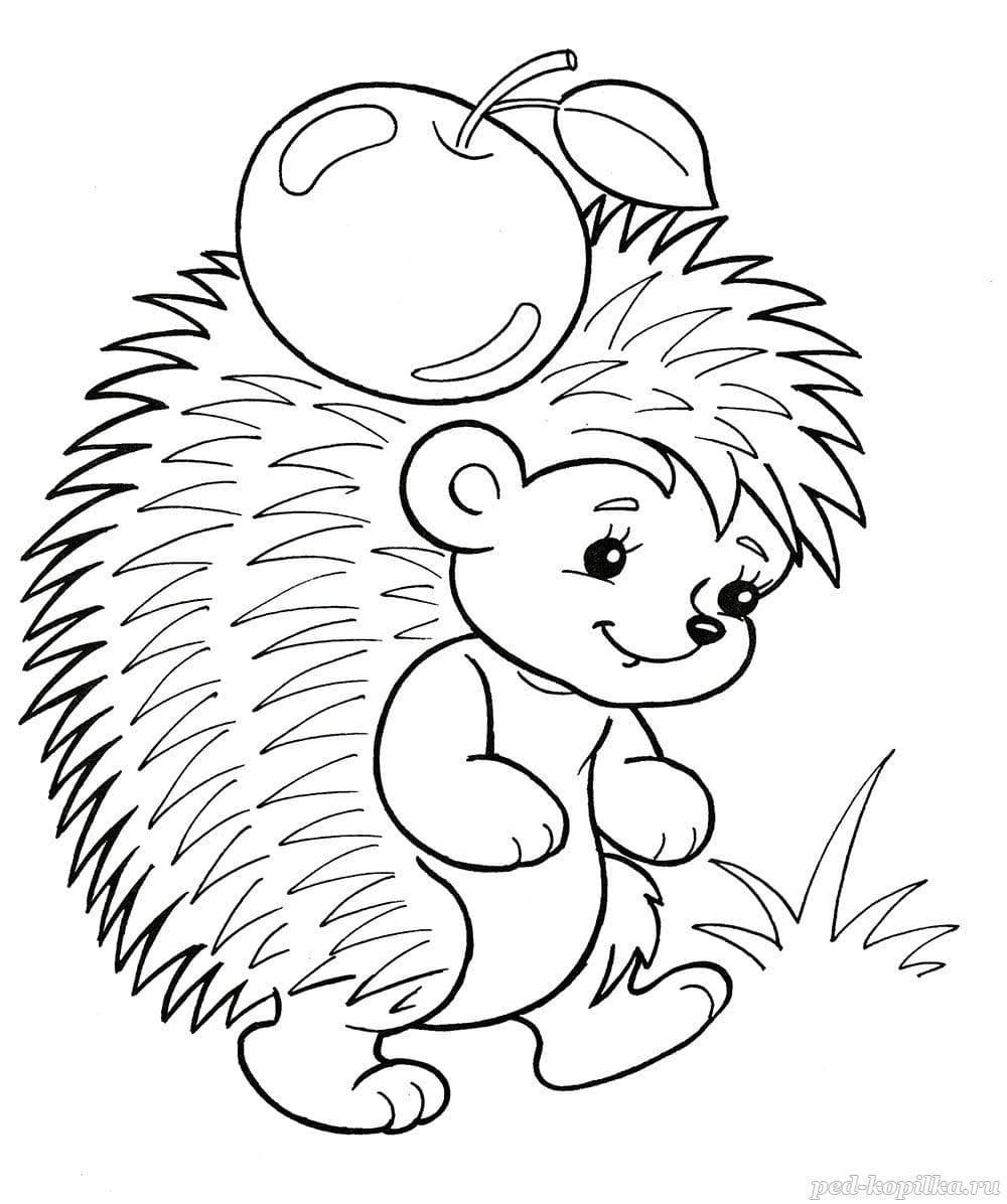 Coloring Pages of Hedgehogs for Children. 100 Images. Print Online!