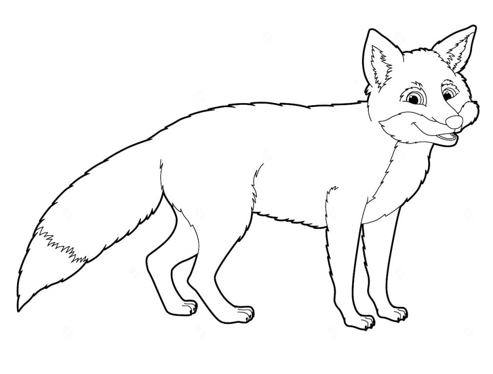 Fox coloring pages. Print for free. For girls and boys