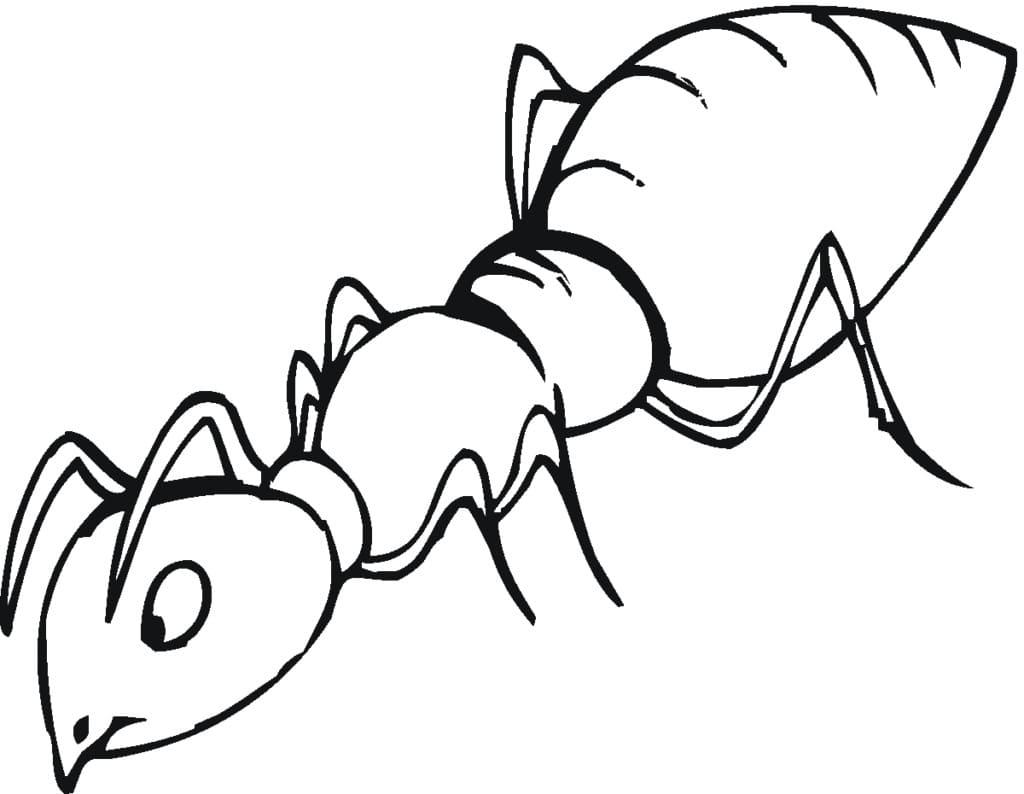Главную, муравей картинка для детей раскраска