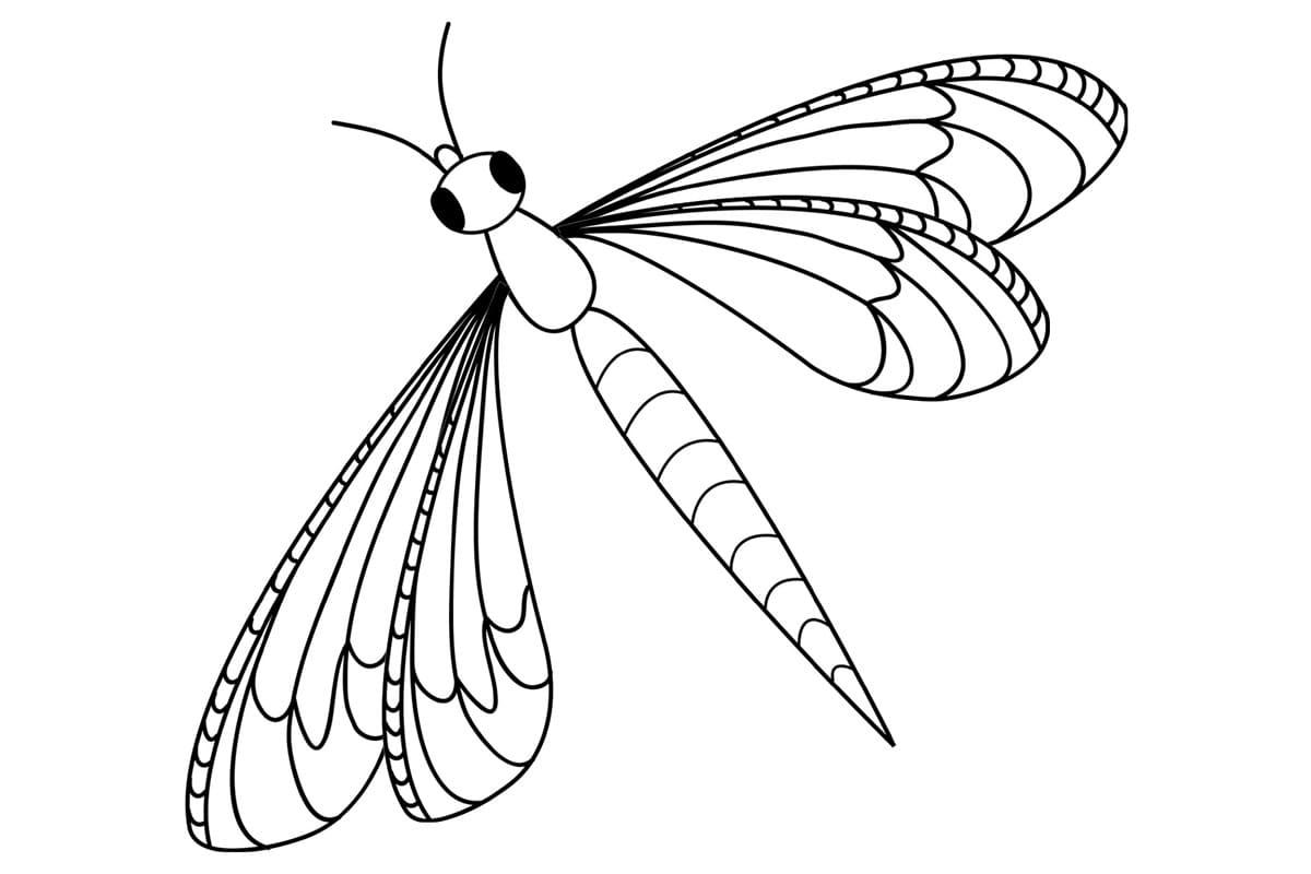 Раскраски насекомых для детей Распечатайте бесплатно