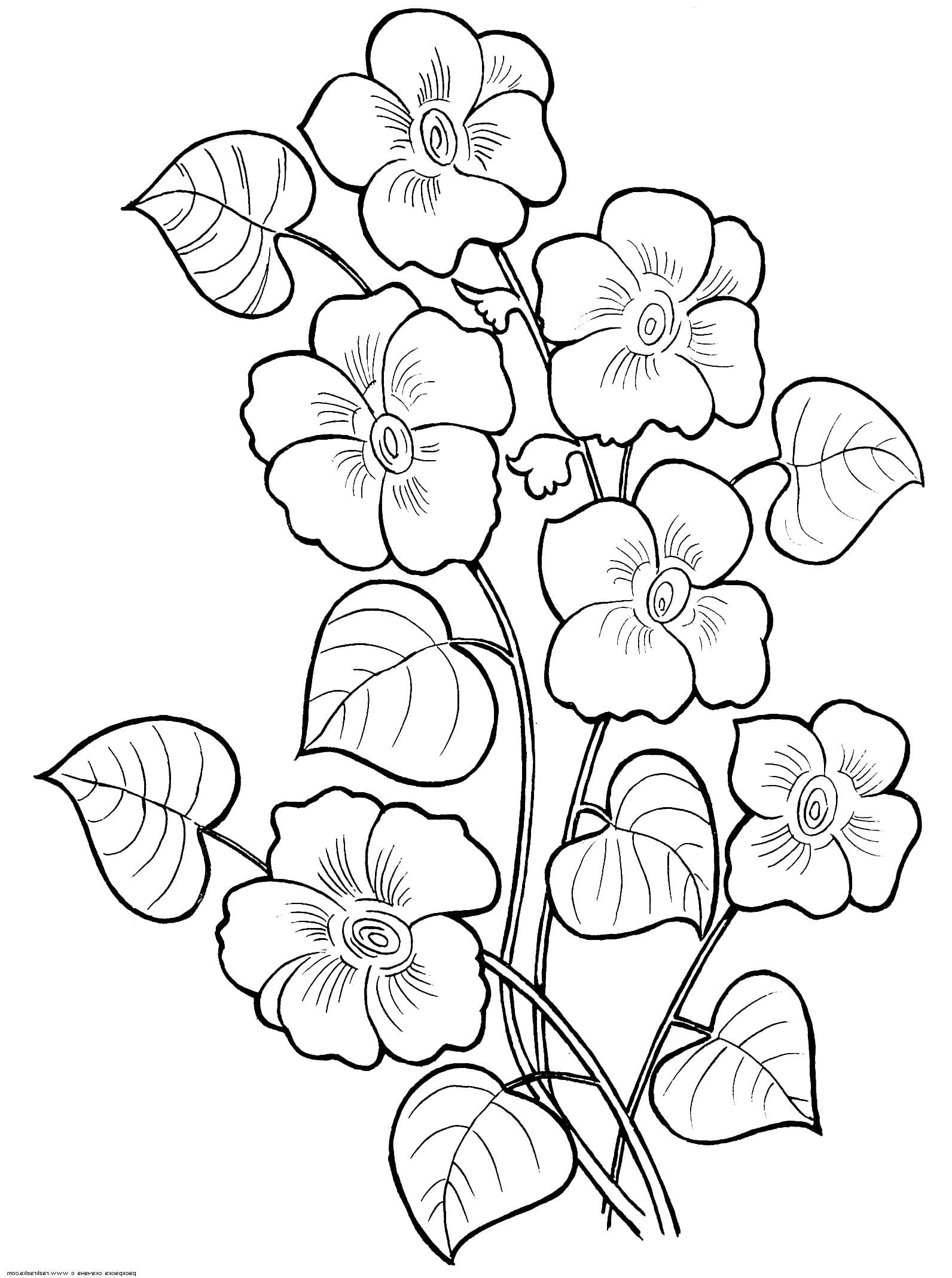 Раскраски Цветы. Красивые изображения для детского творчества
