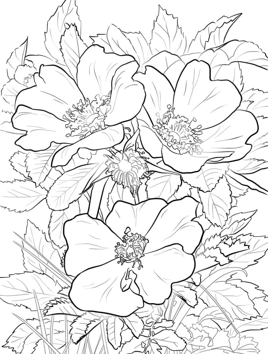 Coloring pages Flowers. Beautiful images for children's creativity