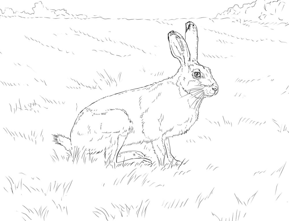 Coloring pages Rabbit. 100 images Bunny and Hares for children free