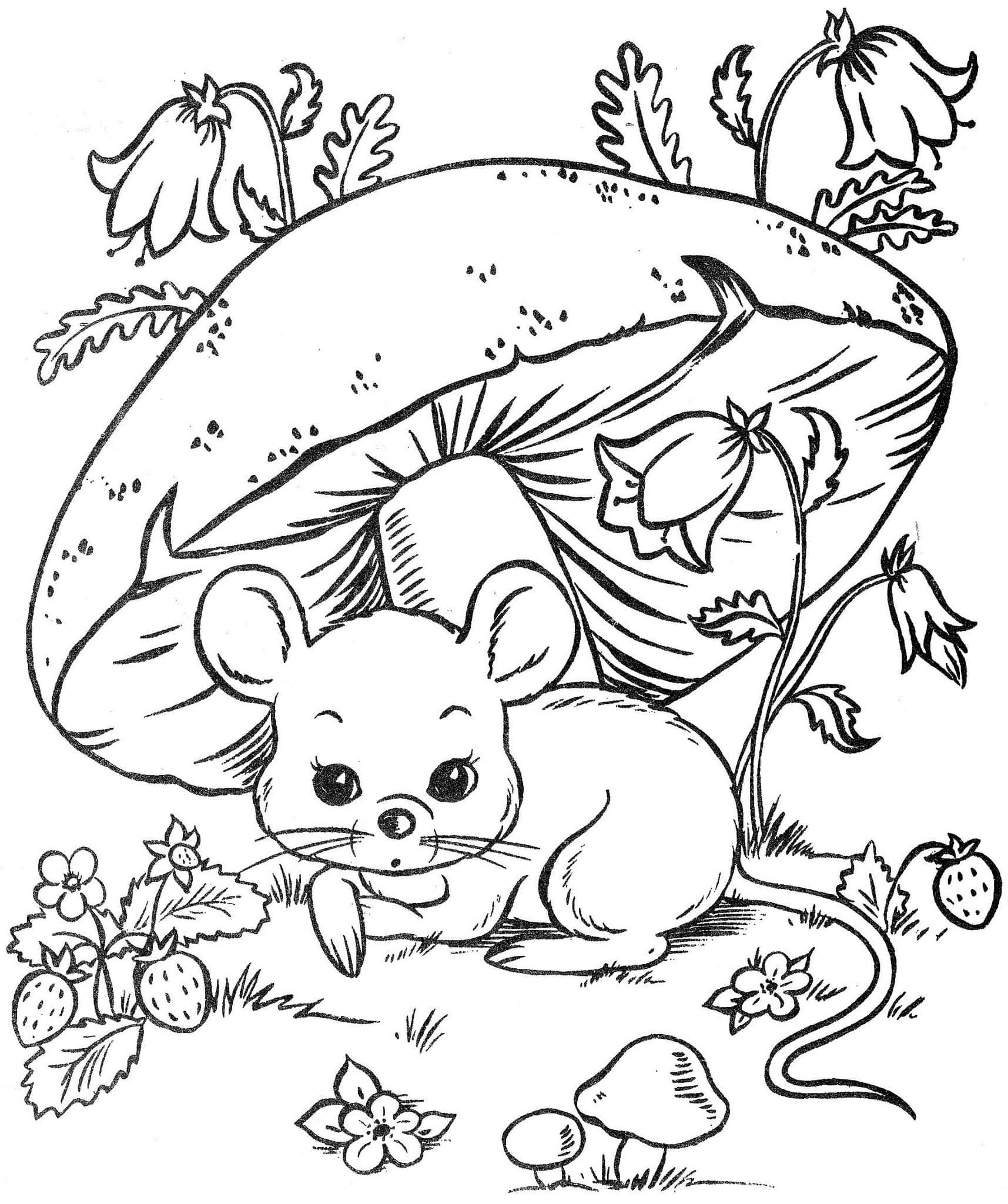 Картинки для раскрашивания лесные животные