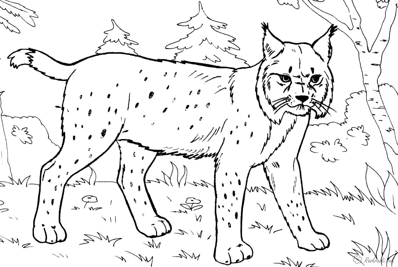 Картинки со зверями для детей распечатать