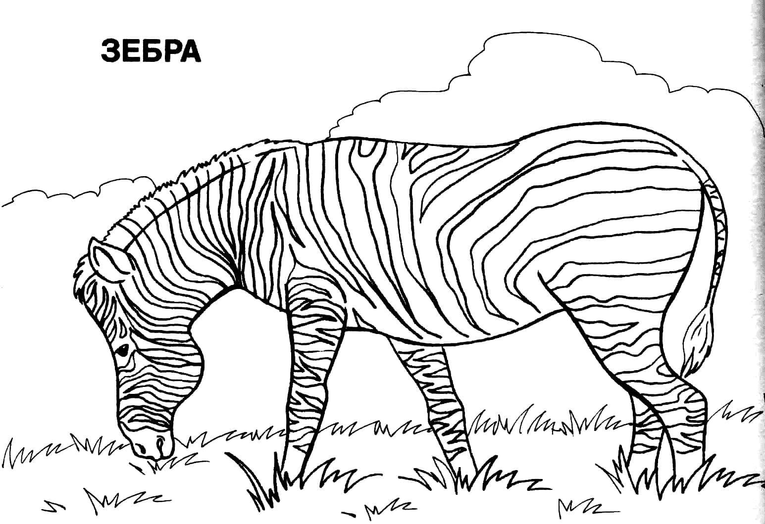 Картинки - раскраски животных. Распечатайте или скачайте онлайн!