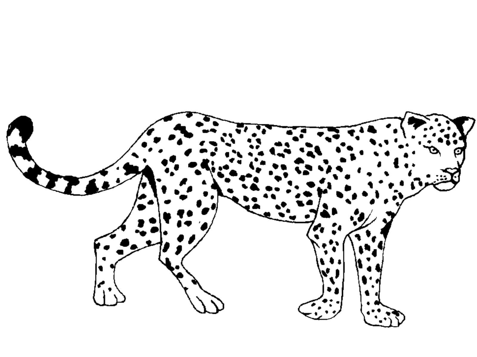 Coloriages pour garçons de 10 ans. Imprimer gratuitement, 100 images