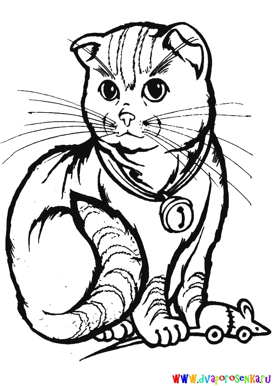 Coloring Pages of Cats. Print 100 pieces of free black and white pictures