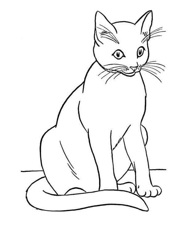 Gatos Páginas Para Colorear Imprime 100 Imágenes Gratis En Blanco Y
