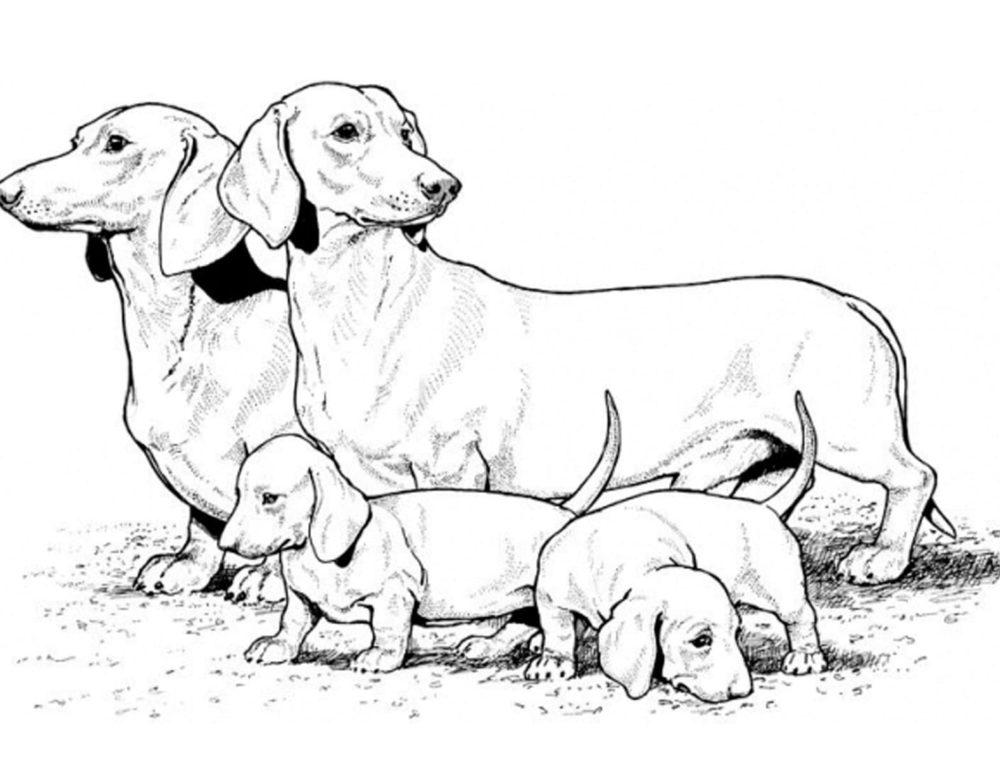 Perros para colorear para niños. Imprimir en línea gratis!
